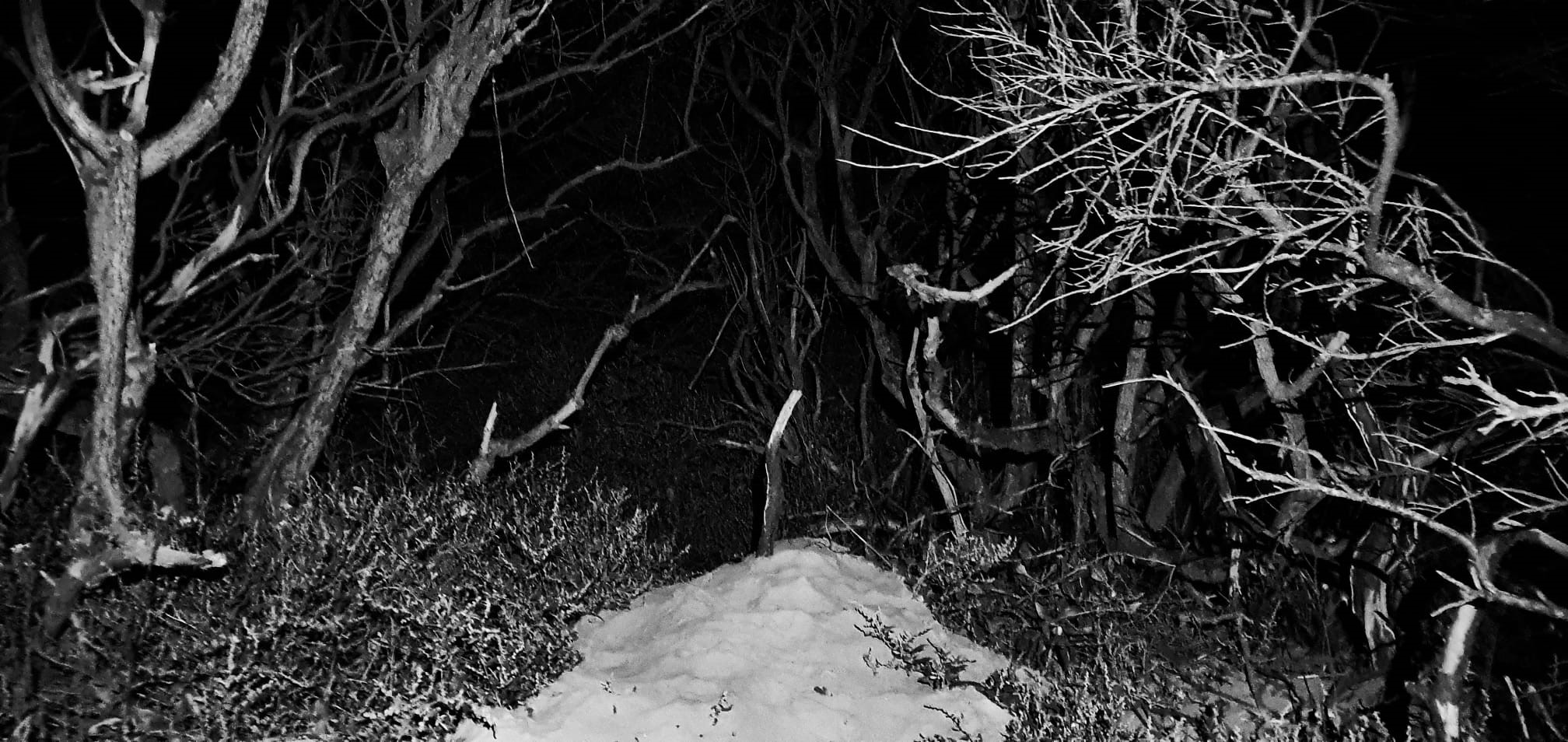 The Hauntings Of Pembrey Woods, Lanelli, South Wales